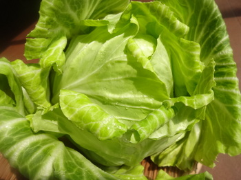 Cabbage (4).JPG