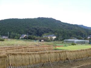 new_Moroyama Aki Tenpiboshi.jpg